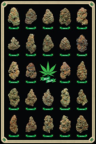 Best Buds Poster 24 x 36in