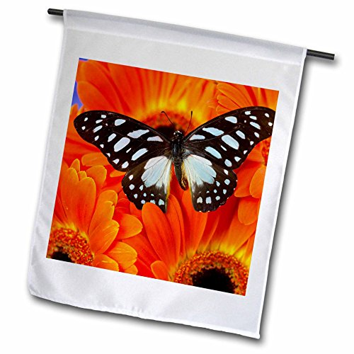 danita-delimont-butterflies-the-veined-swordtail-butterfly-graphium-leonidas-18-x-27-inch-garden-fla