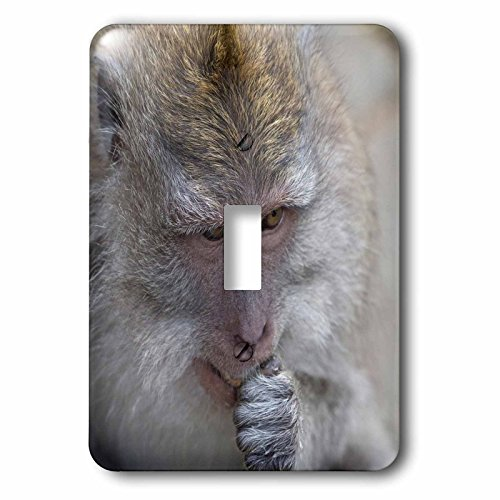 Danita Delimont - Primates - Indonesia, Bali. The Monkey Forest of Padangtegal a sacred site. - Light Switch Covers - single toggle switch (lsp_225782_1) by 3dRose