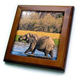 3dRose Danita Delimont - Elephants - Botswana. Okavango Delta. Khwai Concession. Elephant drinking water. - 8x8 Framed Tile (ft_256872_1)