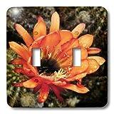3dRose lsp_32390_2 Decorative Colorful Garden Botanic Classic Plant Sw Southwest Desert Cactus Red Orange Rain Flower Double Toggle Switch