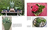 Succulent Container Gardens: Design Eye-Catching