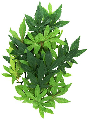 Exo Terra Silk Terrarium Plant, Medium, Abutilon