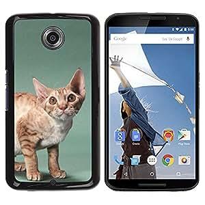 Be Good Phone Accessory // Dura Cáscara cubierta Protectora Caso Carcasa Funda de Protección para Motorola NEXUS 6 / X / Moto X Pro // Javanese Devon Rex Big Ears Cat