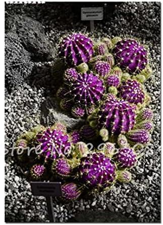 Bonsa/ï De Balcon De Maison De Jardin De Bricolage 100pcs Graines de cactus good01 100pcs Mini-cactus D/écoratif Succulentes Graines De Plantes /à Lest De Cro/ître