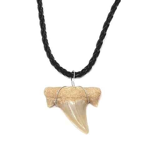Amazon.com: Collar de diente de tiburón para niños, niñas ...