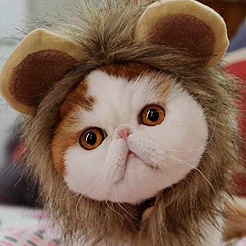 Beetest Mascota Traje León Crin Peluca con Orejas de Gato Perro Fiesta Navidad Halloween Dress up,Talla L de Circunferencia de Cuello 38cm: Amazon.es: ...