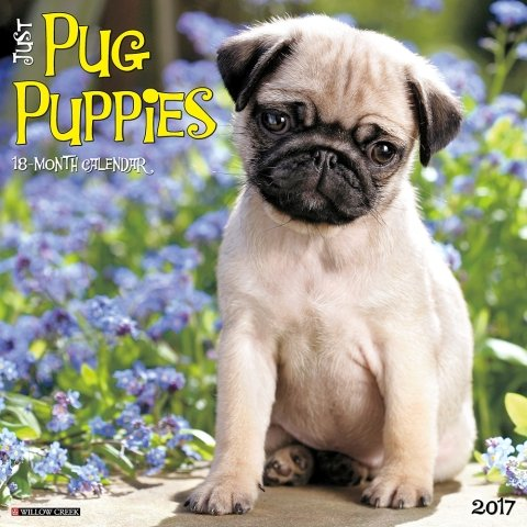 2017-Just-Pug-Puppies-Calendar-12-x-12-Wall-Calendar