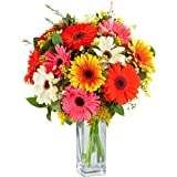 Fresh Gorgeous Gerbera Flowers with FREE Delivery - A real little stunner of a bouquet this, filled with vibrant Gerberas hand tied in matching cellophane using real floristy skills and a big hand made bow