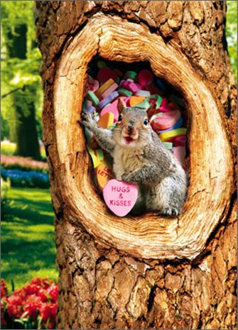 Squirrel In Tree With Candy Heart Stand Out Pop Up Valentine's Day Card