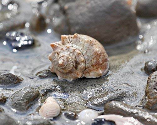 Photograph of seashells and Pebbles on the Beach