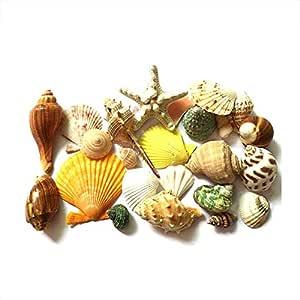 QWER 200g/pack Natural Beach Shell&Conch SeaShells aquarium Fish Tank Landscaping Decoration aquarium Fish Tank Decoration