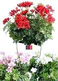 Fleur artificielle, plante artificielle fleurie Géranium Lierre 40cm - couleur : Rouge