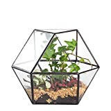 Clear Glass Design Plant Geometric Terrarium Tabletop Crystal Ball Planter Display Box for Succulent Air Plant Black For Sale