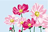 Diy oil painting, paint by number kits for kids - Beautiful flowers 20x30cm
