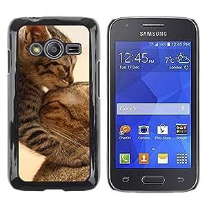 Be Good Phone Accessory // Dura Cáscara cubierta Protectora Caso Carcasa Funda de Protección para Samsung Galaxy Ace 4 G313 SM-G313F // Cute Baby Kitten Cat Mother Furry