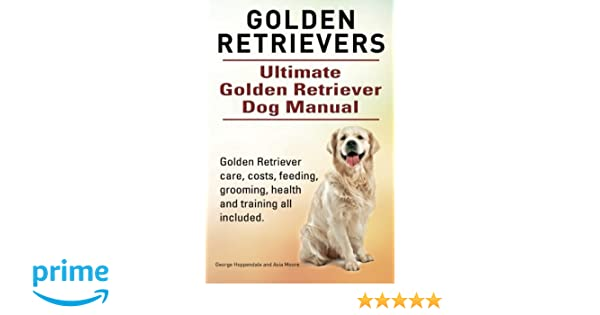 Golden Retriever Bird Dog Training - gaurani almightywind info