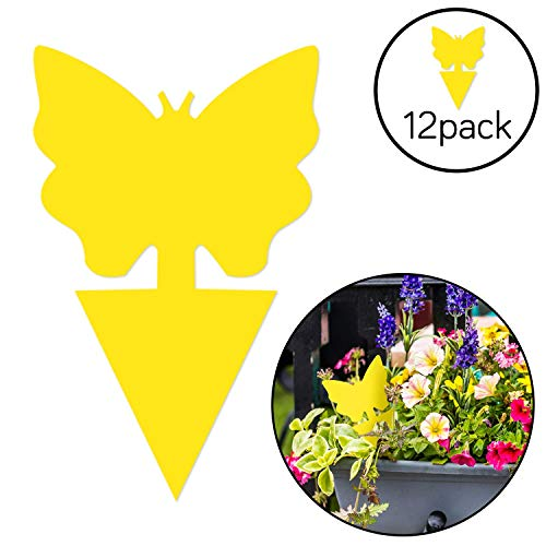 Stingmon 12 Pack Sticky Fruit Fly and Fungus Gnat Killer Indoor and Outdoor, Protect The Plant Non-Toxic and Odorless, Trap A3