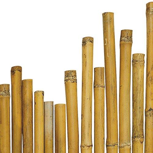 N/° 25 Canne Bamboo Bamb/ù cm 150 x /Ø mm 28-30 Per piante,agricoltura,orto,arredi,strutture,decorazioni