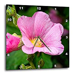 3dRose Alexis Photography - Flowers Malva Mallow - Soft Pink Malva, Mallow, malvaceae, Flower, Dark Green Background - 15x15 Wall Clock (DPP_319944_3)