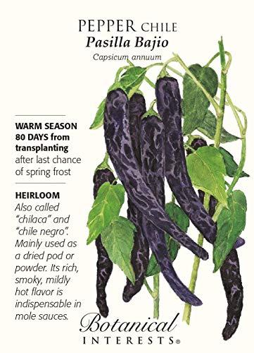 Pasilla Bajio Chile Pepper - 30 Seeds