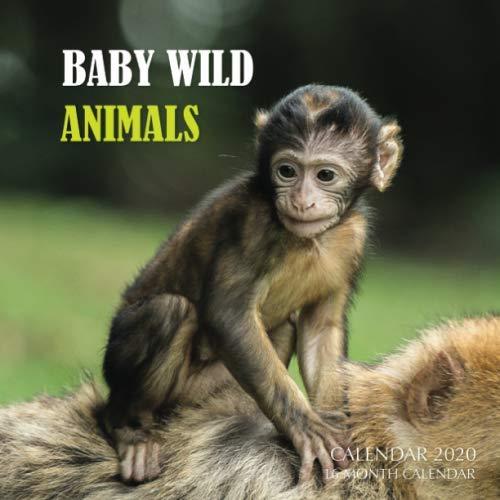 Baby Wild Animals Calendar 2020