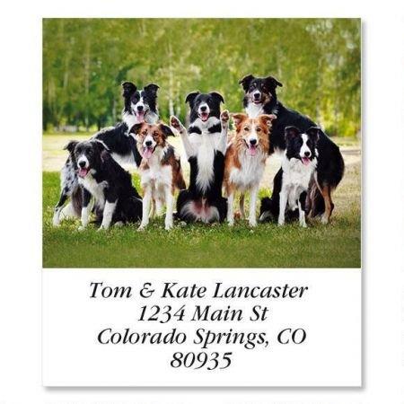 Happy Dogs Square Return Address Labels - Set of 144 1-1/8