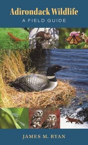 Adirondack Wildlife: A Field Guide