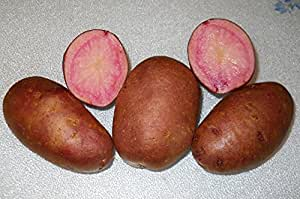 1 pound All Red Seed Potatoes, Adirondack Red Potatoes,A beautiful red inside & outside