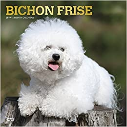 Bichon Frise 2019 12 x 12 Inch Monthly Square Wall Calendar