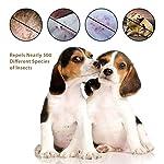 ZREAL-Pet-Collar-Flea-tick-pidocchi-evita-la-zanzara-Repeller-regolabile-olio-essenziale-collari-per-gatti-cani
