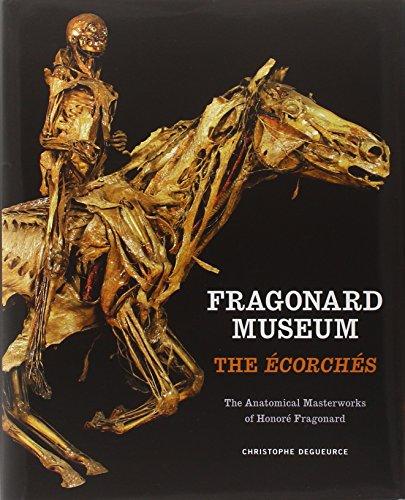Fragonard Museum: The Écorchés Christophe Degueurce