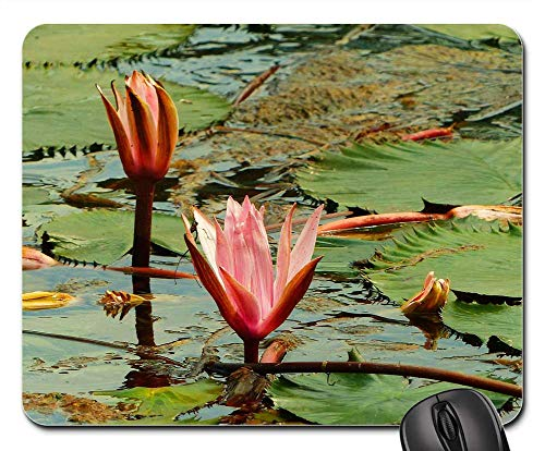 Mouse Pad - Heviz Hungary Thermal Spring Spa Water ()