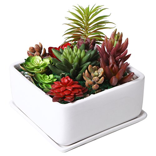 - Modern 7 inch Square Ceramic Succulent Planter Pot with Drainage Tray, Window Box & Saucer, White