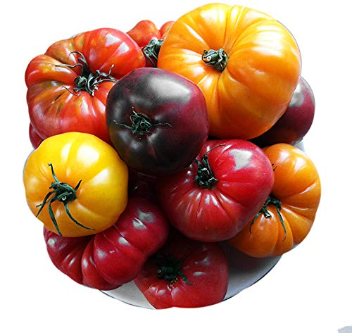 Please Read! This is A Mix!!! 30+ ORGANICALLY Grown Deluxe Tomato Seeds, Mix of 16 Varieties, Heirloom Non-GMO, Indeterminate, Old German, Chocolate Stripes, Ukrainian Purple, Amish Paste, from USA (Heirloom Tomato Seed Mix)