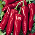 Big Jim Hot Pepper Garden Seeds - Non-GMO, Heirloom Vegetable Gardening Seeds