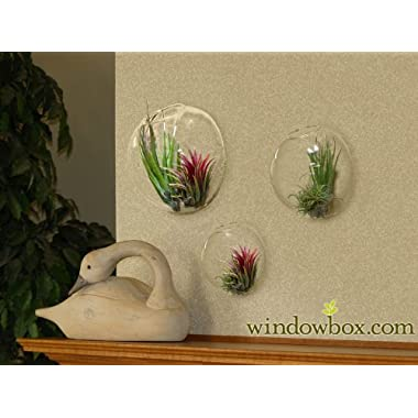 Set of 3 Glass Wall Terrarium Globe Bubbles