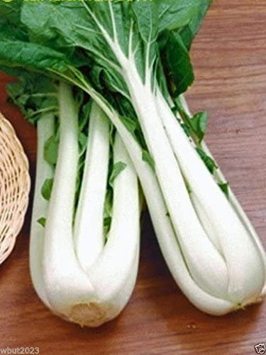 Amazon.com: Largo Bok Choi – taisai – blanco tallo, 18 ...