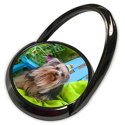 3dRose Danita Delimont - Dogs - Yorkshire Terrier Sitting on Blue Chair with Green Fabric - Phone Ring - Fabric Terrier 1