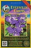 Everwilde Farms - 200 Prairie Spiderwort Native Wildflower Seeds - Gold Vault Jumbo Seed Packet