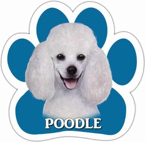 Poodle Car Magnet With Unique Paw Shaped Design Measures 5.2 by 5.2 Inches Covered In UV Gloss For Weather Protection (White T-shirt Magnet)