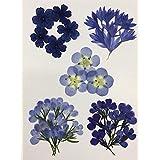 【お花屋さんの押し花セット ブルー小花Mix】人気のお花をチョイス ネモフィラ ロベリア バーベナ 矢車草