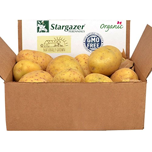 Yukon Gold Seed Potatoes 2.5 Pounds | Certified Organic Virus-Free Non-GMO Yellow Potato