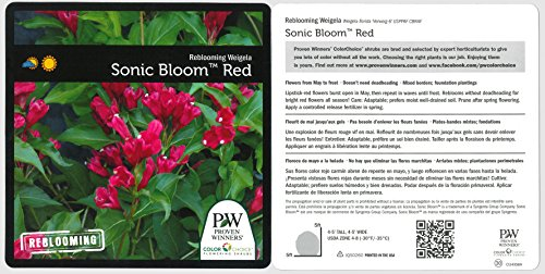 1 Gal. Sonic Bloom Red Reblooming Weigela (Florida) Live Shrub, Red Flowers by Proven Winners (Image #2)