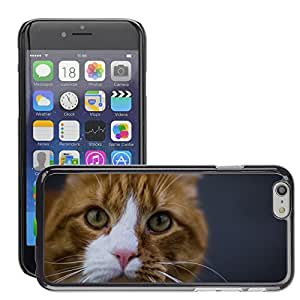 Cas Coq Case Cover // M00147422 Gato siberiano animal anaranjada felina // Apple iPhone 6 4.7""