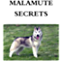 Malamute Secrets: How to Raise Happy and Healthy Alaskan Malamute Dogs