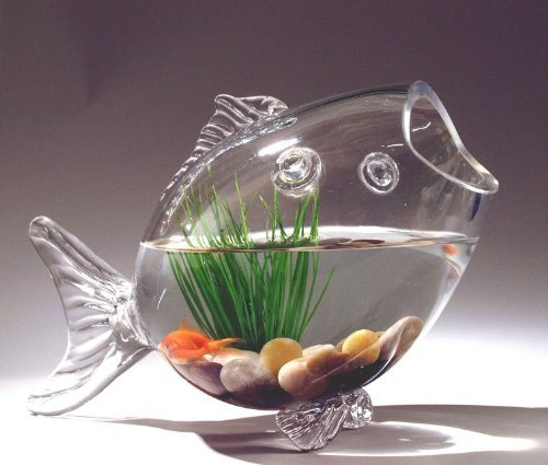 fish shaped glass fish bowl aquarium 9 h x 14 w buy
