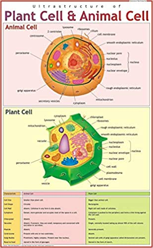 ultra-structure of plant cell & animal cell wall chart – 2018