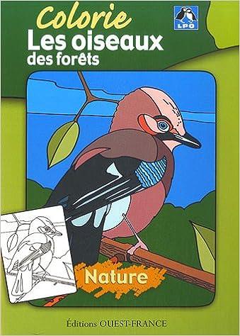 Colorie les oiseaux des forêts pdf, epub ebook