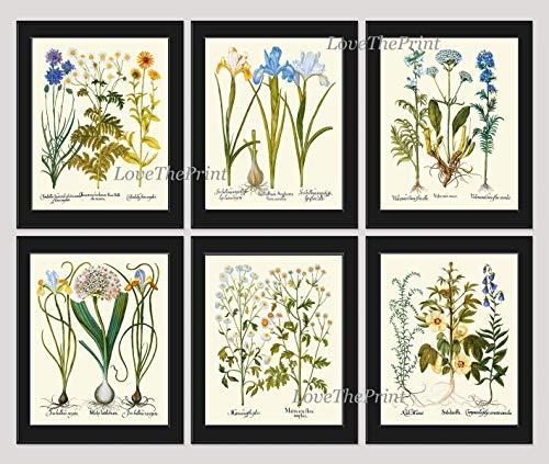Blue Flower Botanical Print Set of 6 Antique Beautiful Flowers Cornflower Bachelor Button Tansies Calendula Iris Valerian Hibiscus Campanula Bellflowers Home Room Decor Wall Art -